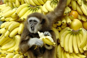 10 килограмм бананов